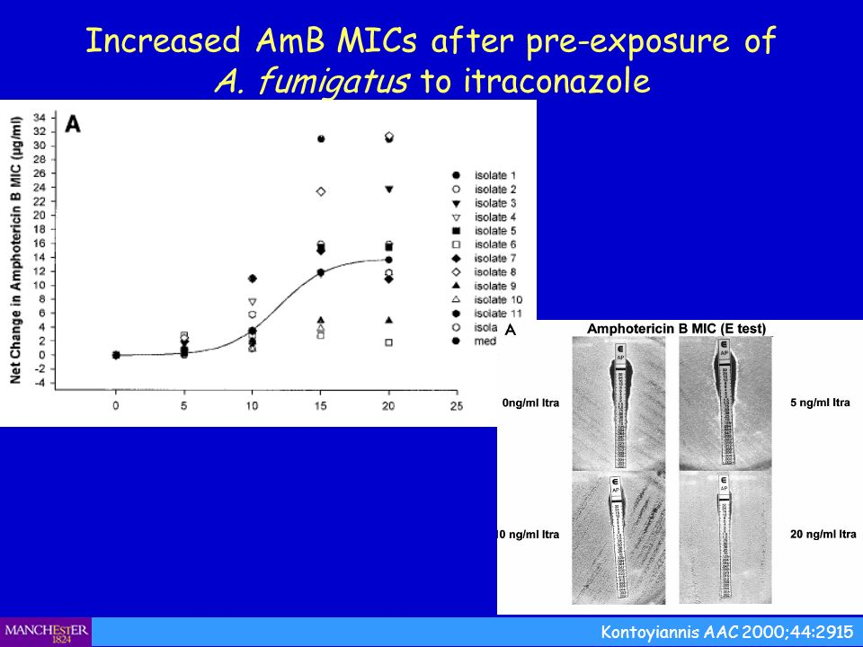 Increased AmB MICs after pre-exposure of A. fumigatus to itraconazole Kontoyiannis AAC 2000;44:2915
