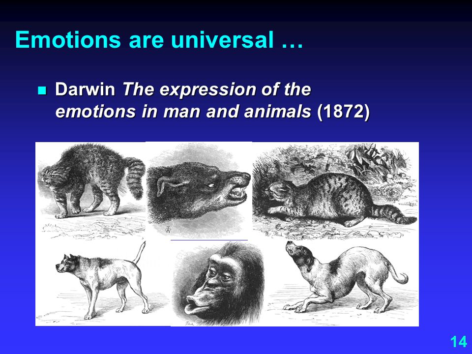 14 Emotions are universal … Darwin The expression of the emotions in man and animals (1872) Darwin The expression of the emotions in man and animals (