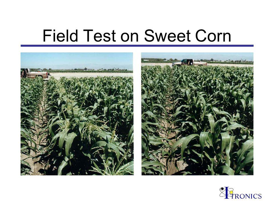 Field Test on Sweet Corn