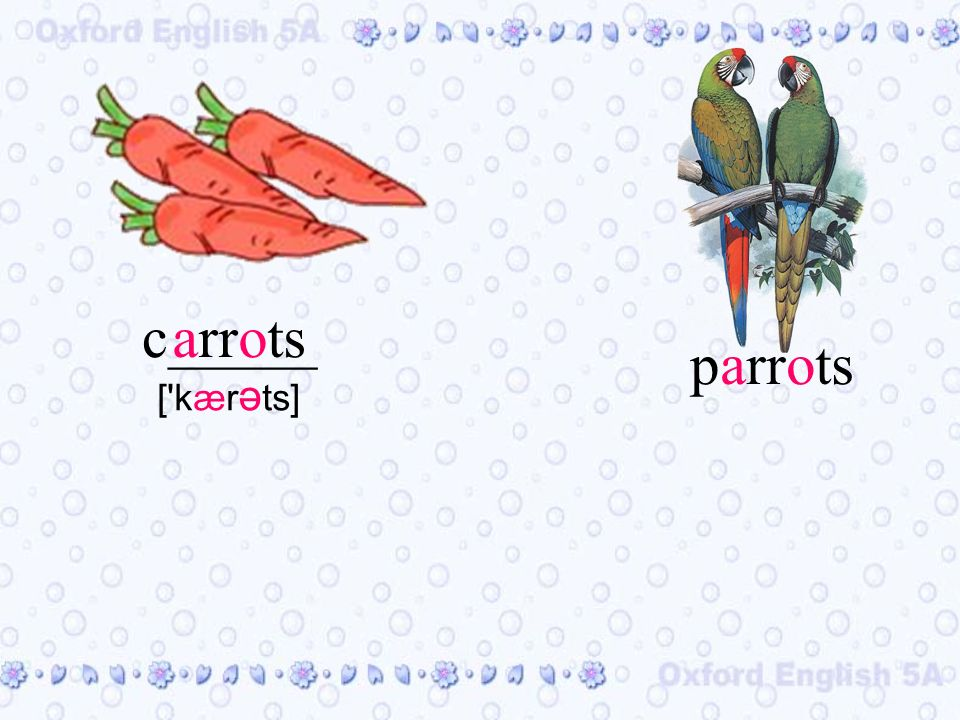 arrotsc_____ [ kær ə ts] parrots