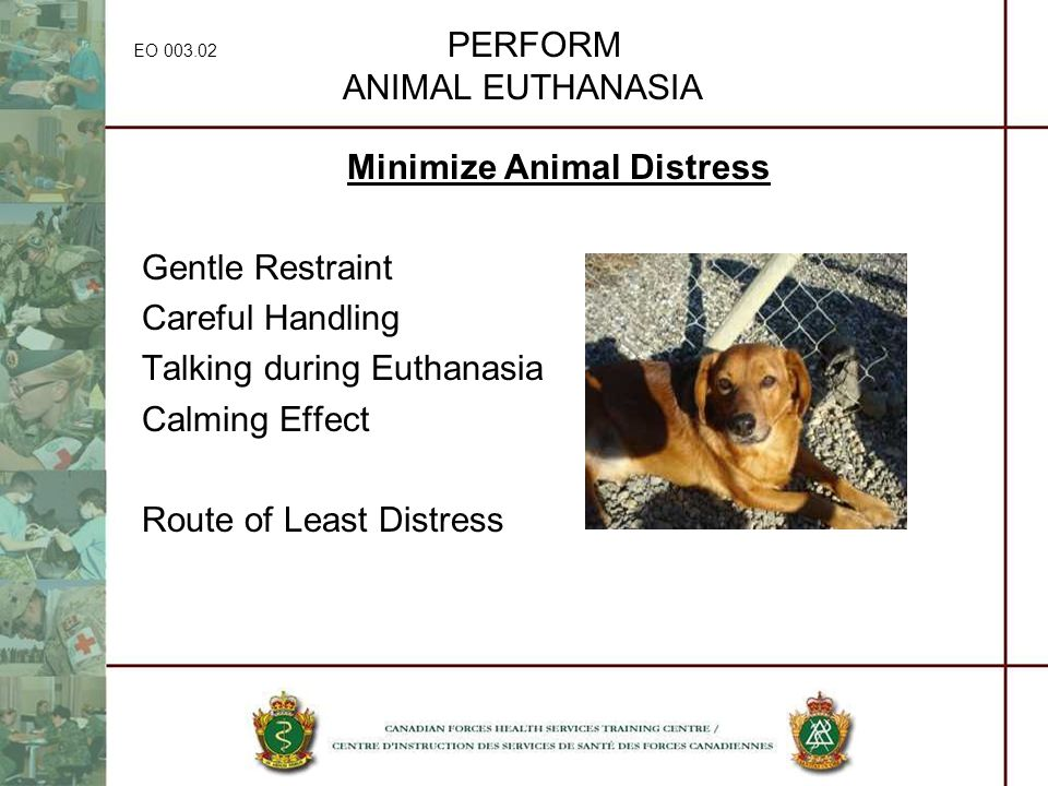 EO 003.02 PERFORM ANIMAL EUTHANASIA Minimize Animal Distress Gentle Restraint Careful Handling Talking during Euthanasia Calming Effect Route of Least