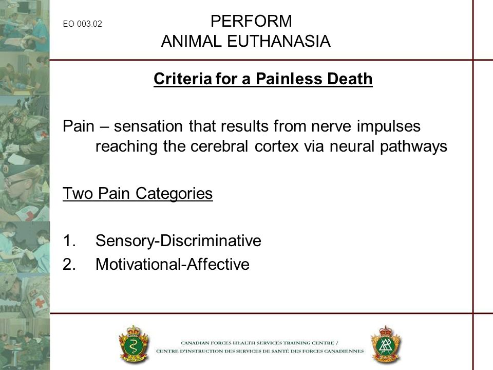 EO 003.02 PERFORM ANIMAL EUTHANASIA Criteria for a Painless Death Pain – sensation that results from nerve impulses reaching the cerebral cortex via n