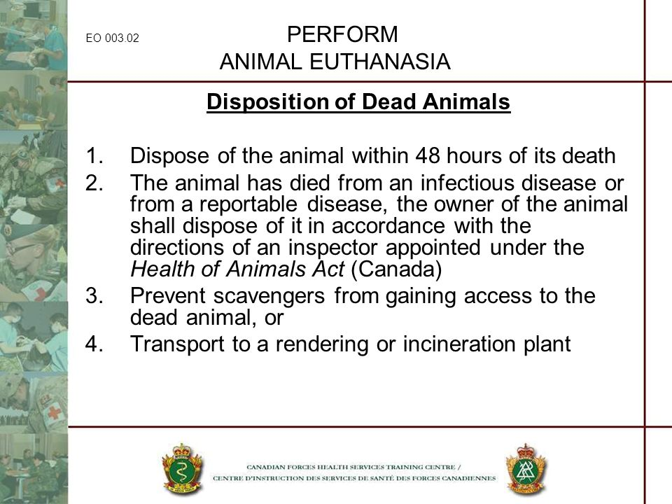 EO 003.02 PERFORM ANIMAL EUTHANASIA Disposition of Dead Animals 1.Dispose of the animal within 48 hours of its death 2.The animal has died from an inf