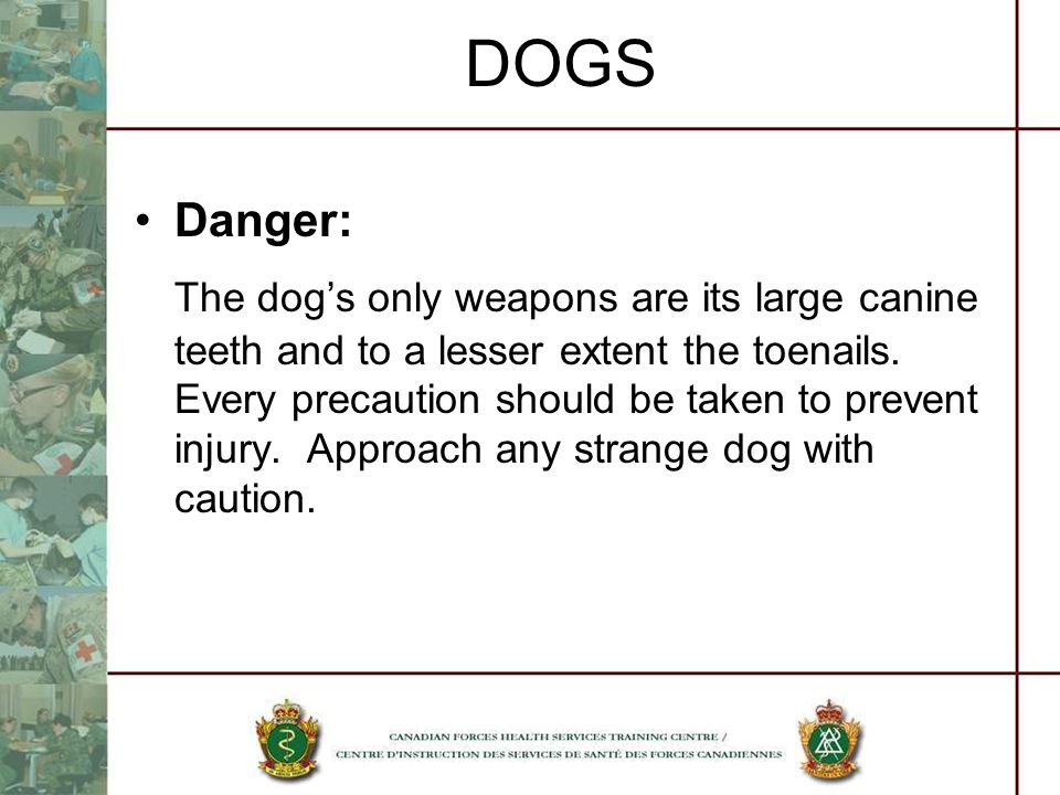 DOGS Danger: The dogs only weapons are its large canine teeth and to a lesser extent the toenails. Every precaution should be taken to prevent injury.