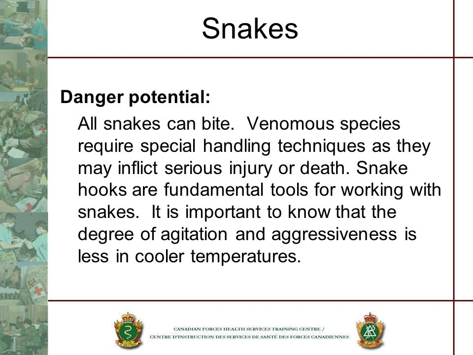 Snakes Danger potential: All snakes can bite. Venomous species require special handling techniques as they may inflict serious injury or death. Snake