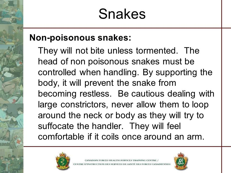 Snakes Non-poisonous snakes: They will not bite unless tormented. The head of non poisonous snakes must be controlled when handling. By supporting the