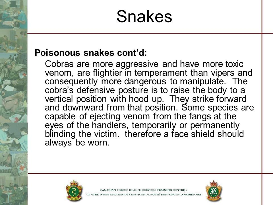 Snakes Poisonous snakes contd: Cobras are more aggressive and have more toxic venom, are flightier in temperament than vipers and consequently more da
