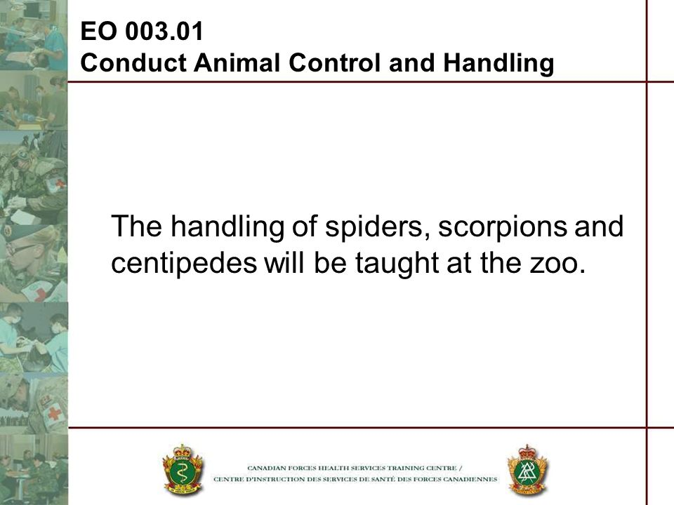 EO 003.01 Conduct Animal Control and Handling The handling of spiders, scorpions and centipedes will be taught at the zoo.