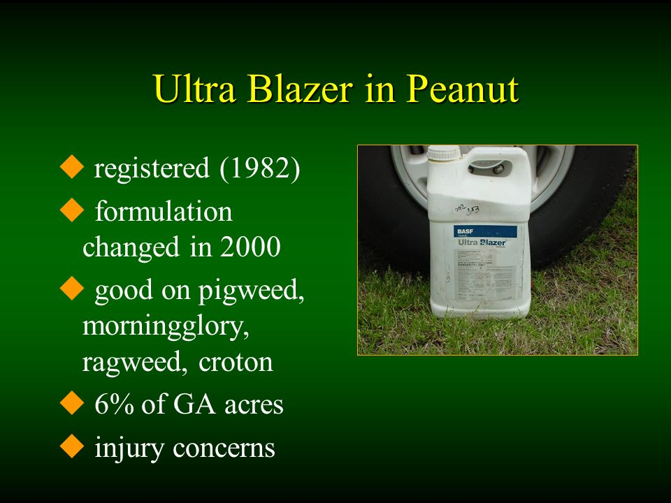 Ultra Blazer in Peanut u registered (1982) u formulation changed in 2000 u good on pigweed, morningglory, ragweed, croton u 6% of GA acres u injury concerns