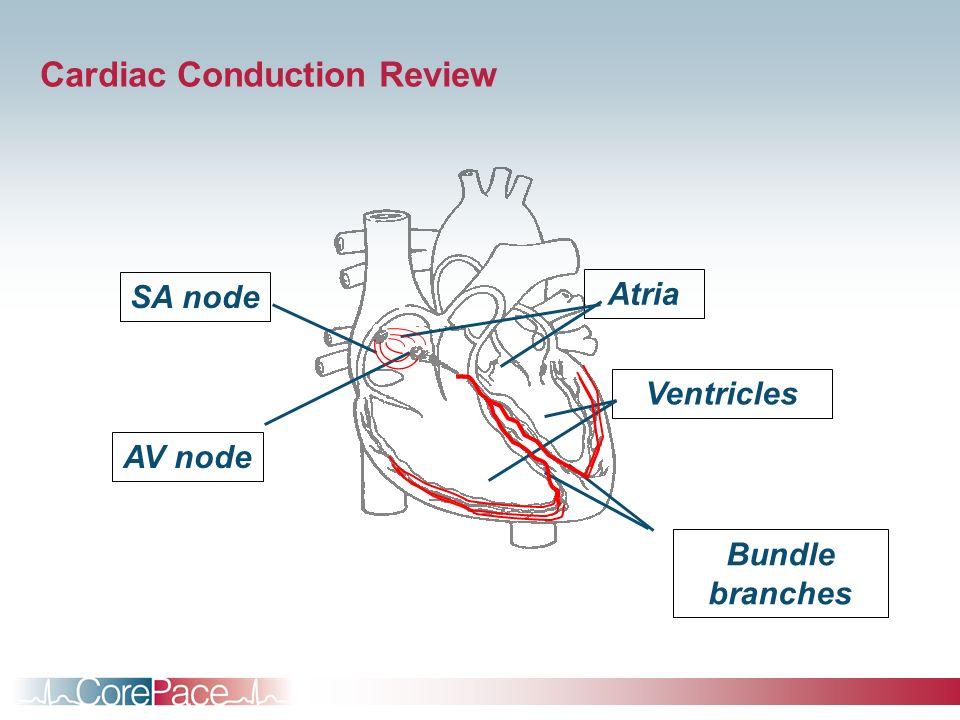 Atria Ventricles Bundle branches AV node SA node Cardiac Conduction Review