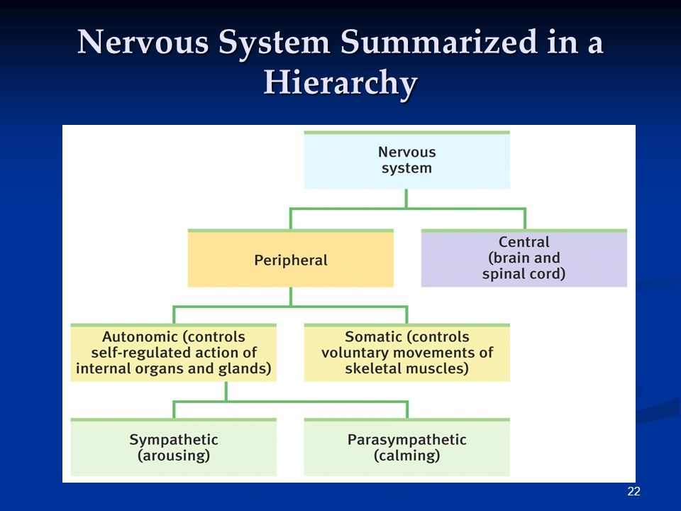 21 Hierarchy Complex information broken down into broad concepts and further subdivided into categories and subcategories.