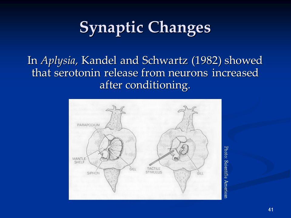 40 Storing Memories in the Brain 1. Loftus and Loftus (1980) reviewed previous research data showing, through brain stimulation, that memories were et
