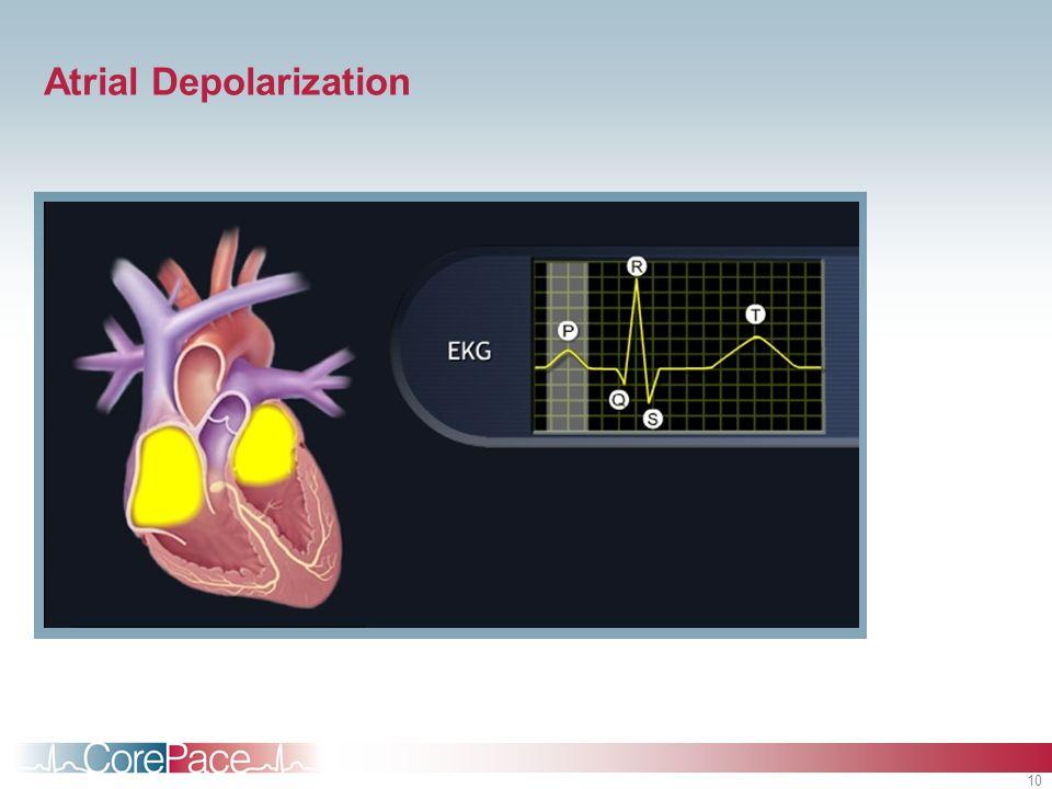 10 Atrial Depolarization