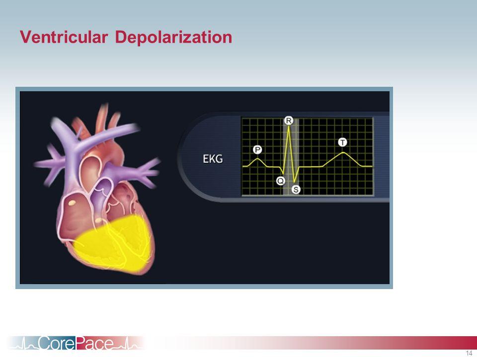 14 Ventricular Depolarization