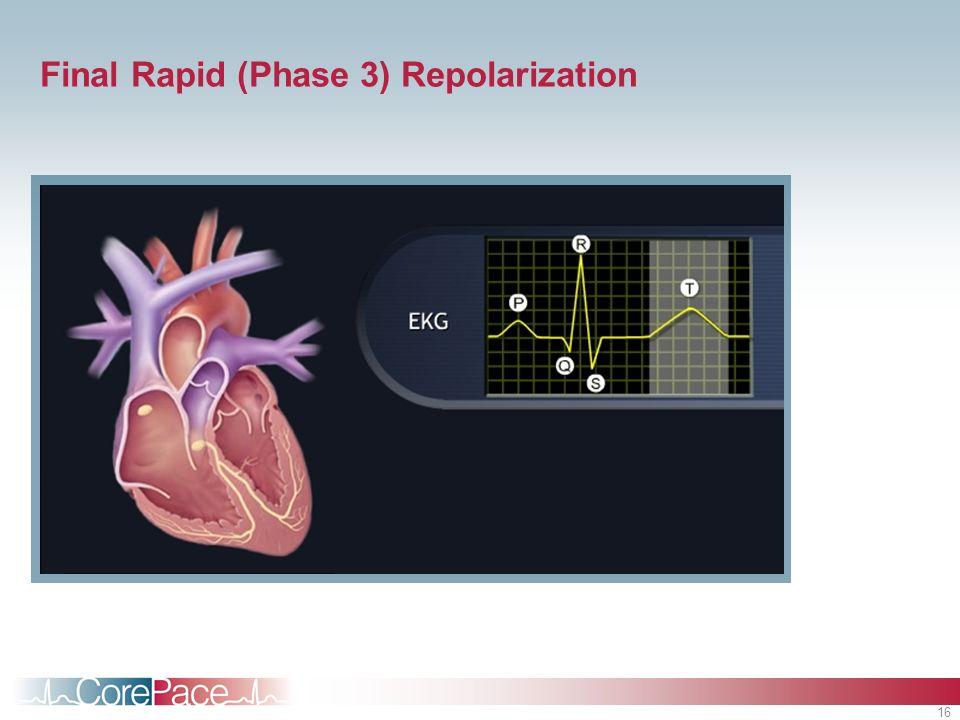 16 Final Rapid (Phase 3) Repolarization