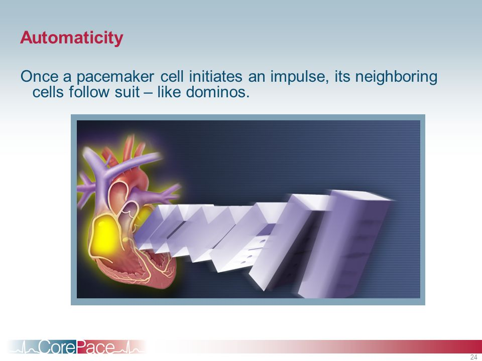 24 Automaticity Once a pacemaker cell initiates an impulse, its neighboring cells follow suit – like dominos.