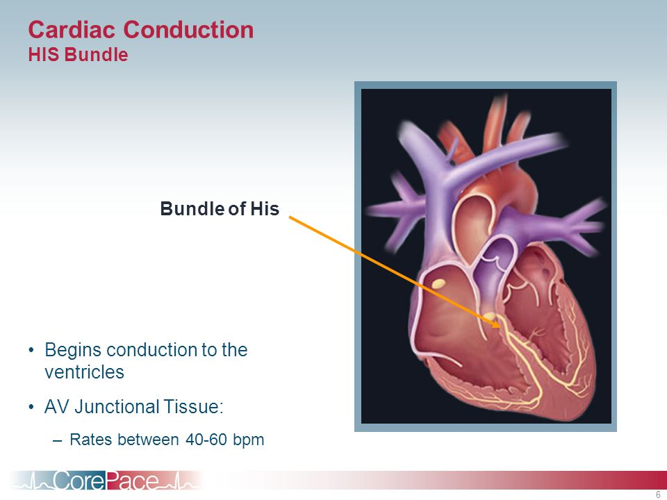 6 Cardiac Conduction HIS Bundle Begins conduction to the ventricles AV Junctional Tissue: –Rates between 40-60 bpm Bundle of His