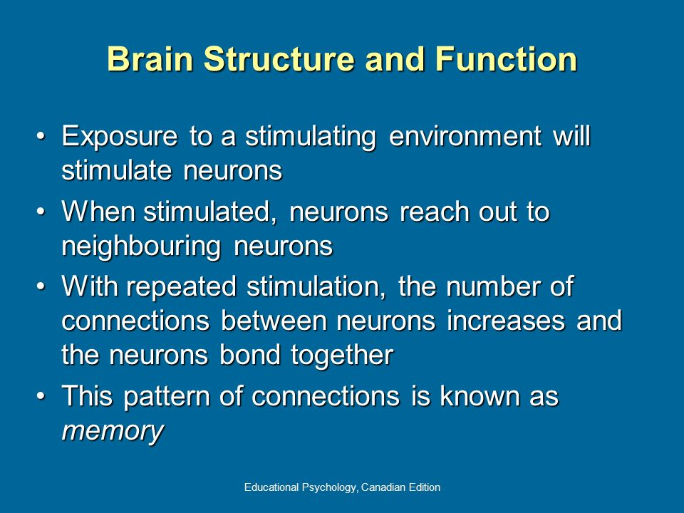 Educational Psychology, Canadian Edition Brain Structure and Function Exposure to a stimulating environment will stimulate neuronsExposure to a stimul