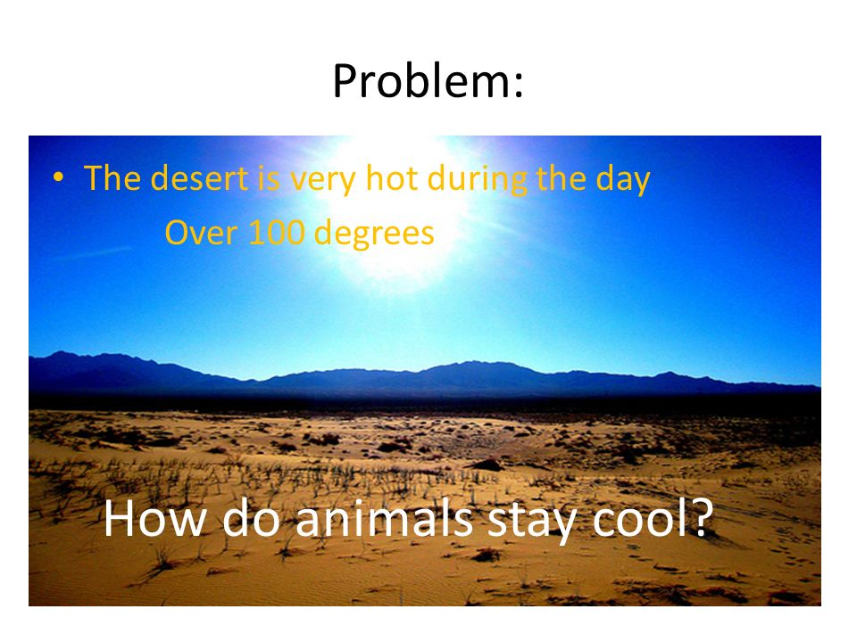 Problem: The desert is very hot during the day Over 100 degrees How do animals stay cool