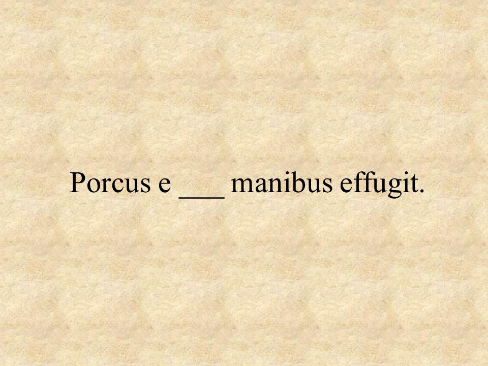 Porcus e ___ manibus effugit.