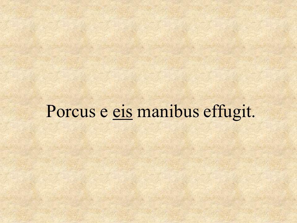Porcus e eis manibus effugit.