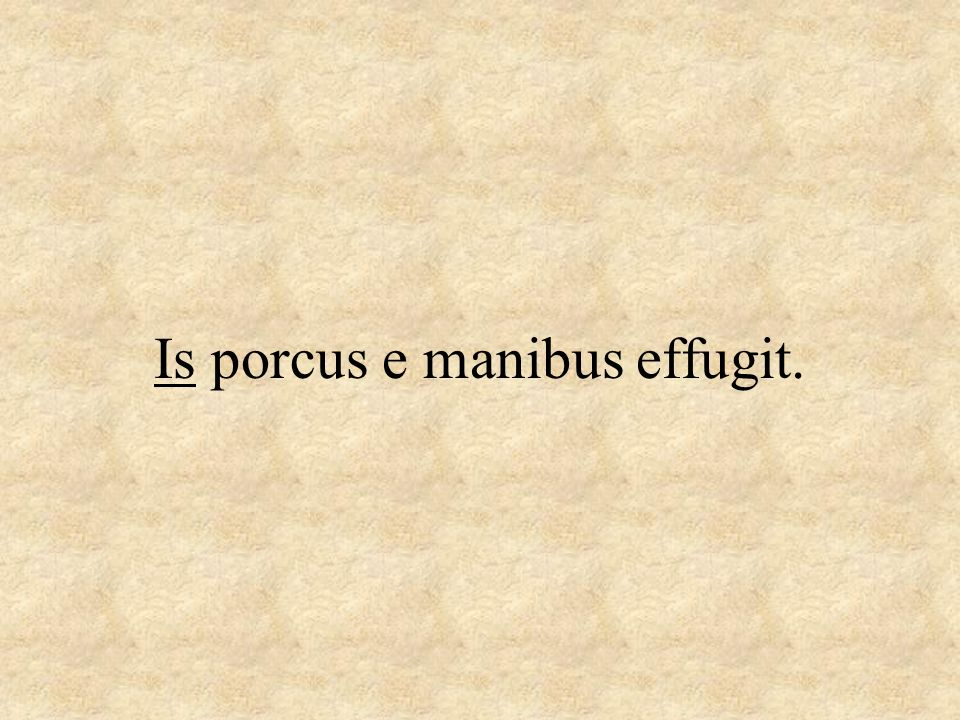 Is porcus e manibus effugit.