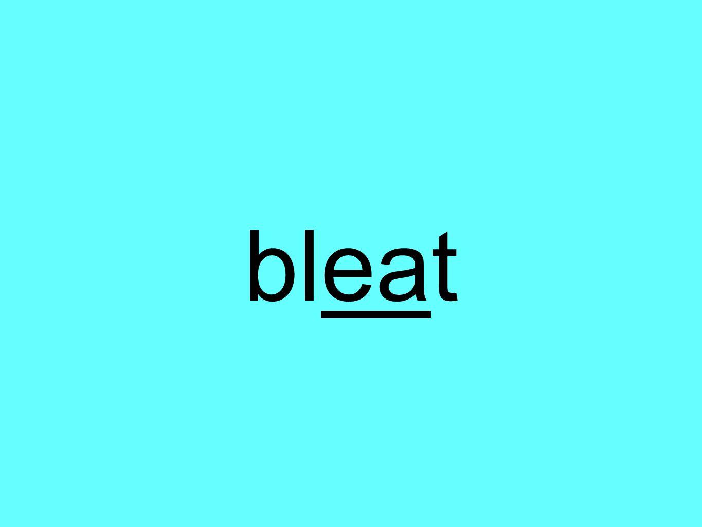 bleat