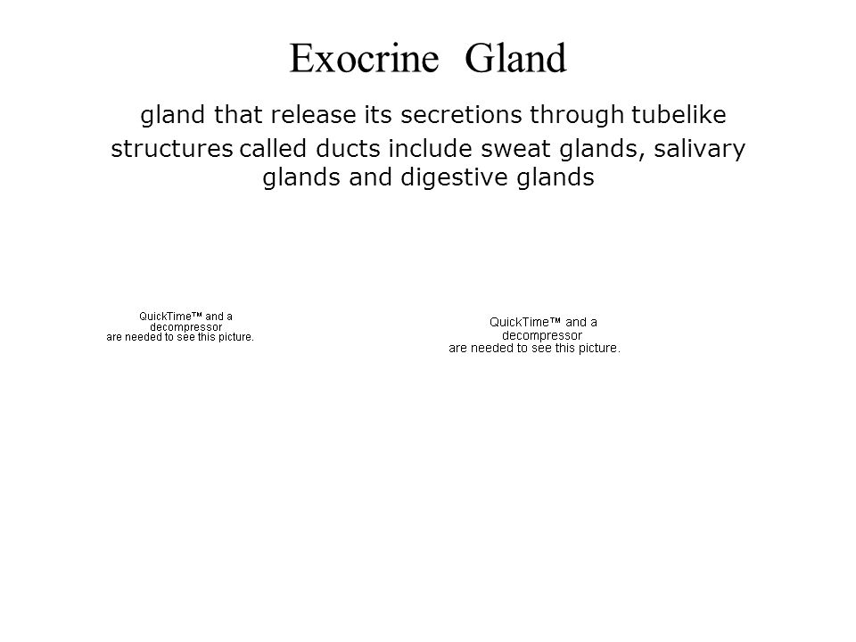 Exocrine Gland gland that release its secretions through tubelike structures called ducts include sweat glands, salivary glands and digestive glands