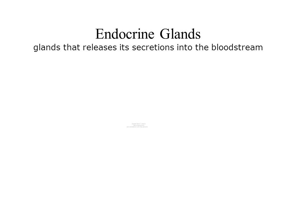 Endocrine Glands glands that releases its secretions into the bloodstream