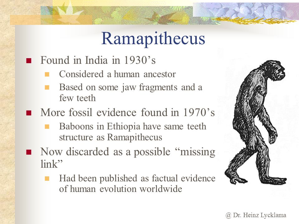 @ Dr. Heinz Lycklama Ramapithecus Found in India in 1930s Considered a human ancestor Based on some jaw fragments and a few teeth More fossil evidence