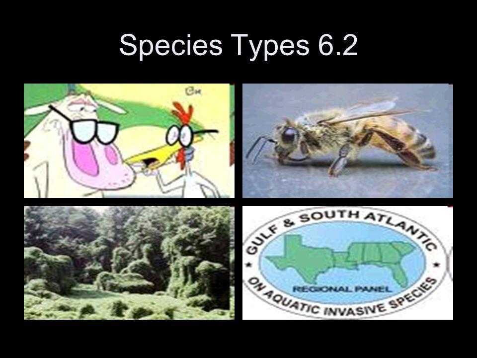 Species Types 6.2