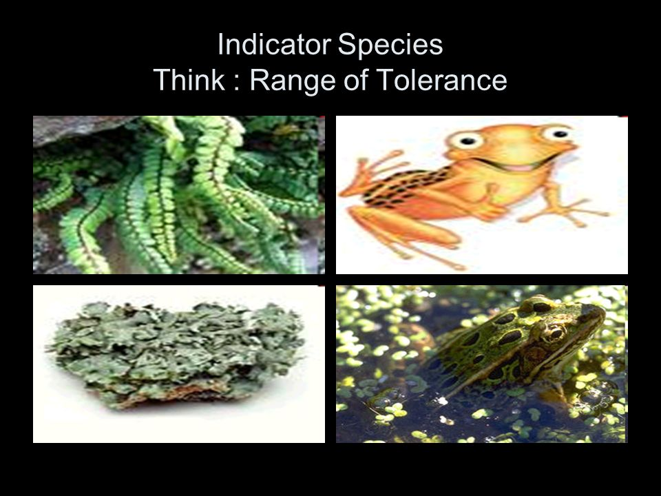 Indicator Species Think : Range of Tolerance