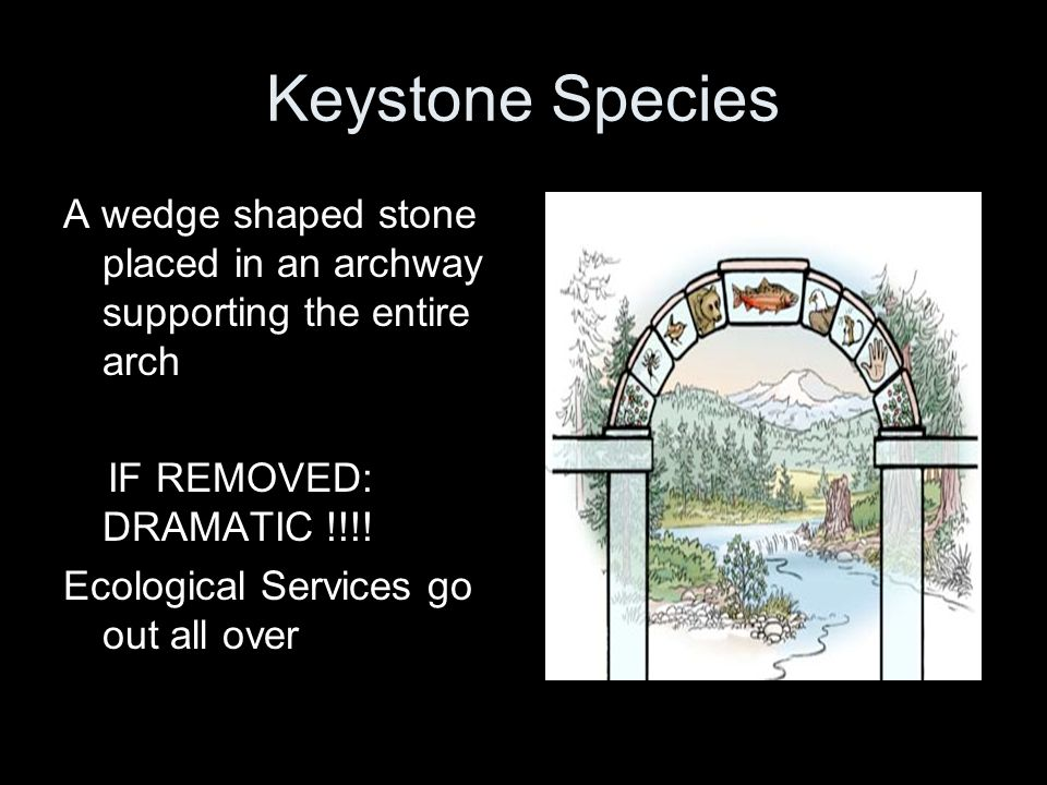 Keystone Species A wedge shaped stone placed in an archway supporting the entire arch IF REMOVED: DRAMATIC !!!! Ecological Services go out all over