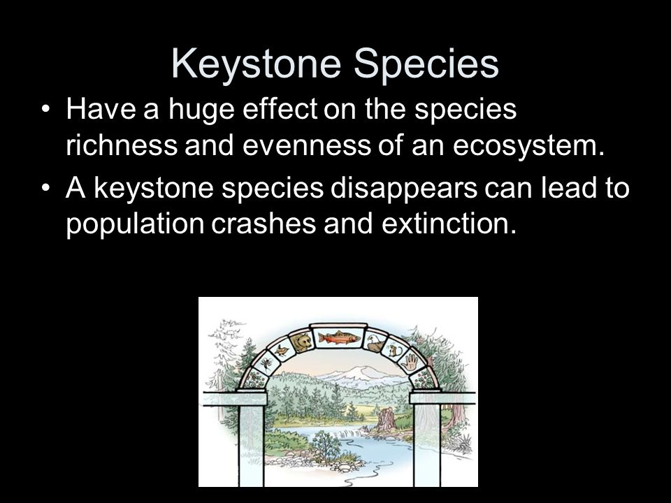 Keystone Species Have a huge effect on the species richness and evenness of an ecosystem. A keystone species disappears can lead to population crashes