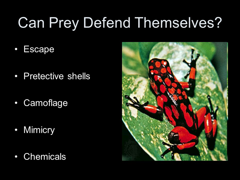 Can Prey Defend Themselves? Escape Pretective shells Camoflage Mimicry Chemicals