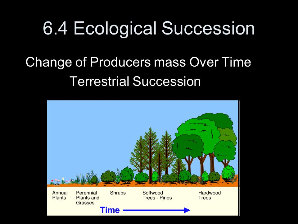6.4 Ecological Succession Change of Producers mass Over Time Terrestrial Succession