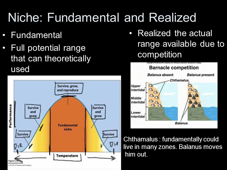 Niche: Fundamental and Realized Realized the actual range available due to competition Fundamental Full potential range that can theoretically used Ch