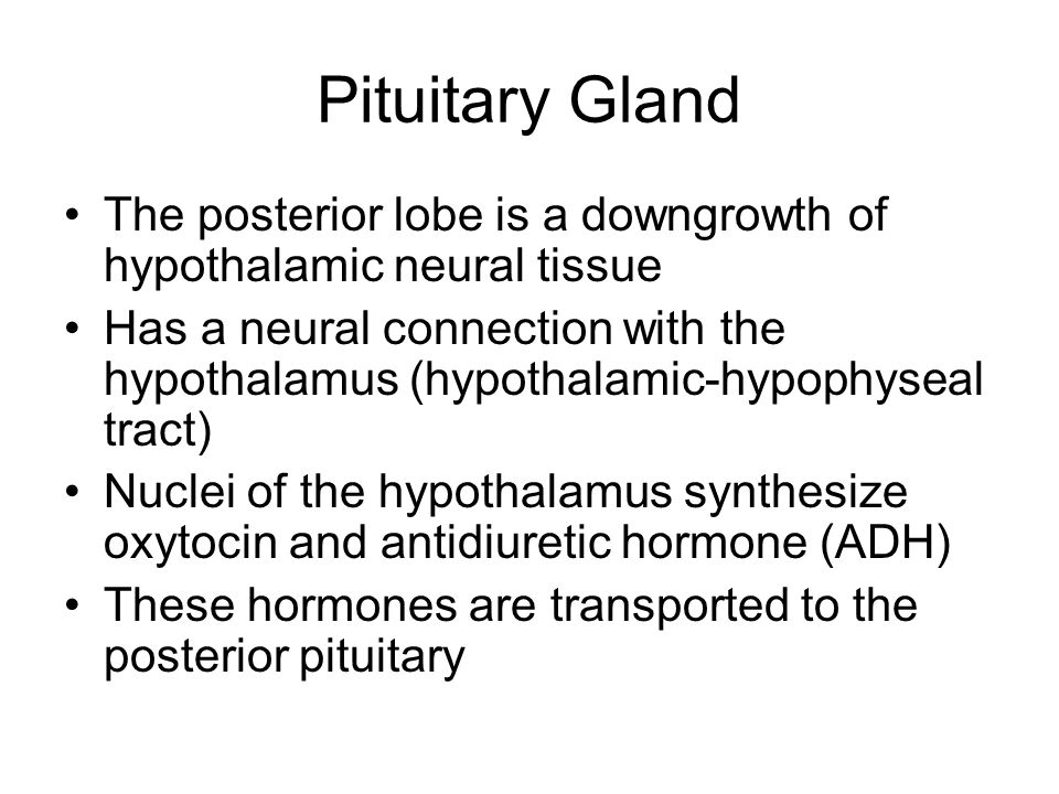 The posterior lobe is a downgrowth of hypothalamic neural tissue Has a neural connection with the hypothalamus (hypothalamic-hypophyseal tract) Nuclei