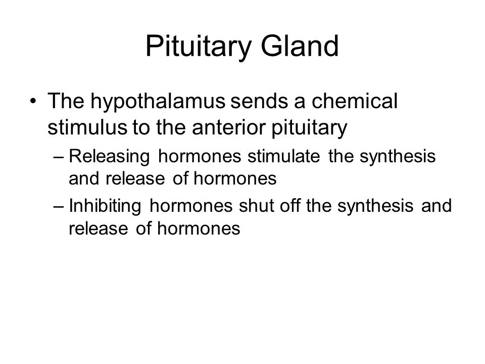 Pituitary Gland The hypothalamus sends a chemical stimulus to the anterior pituitary –Releasing hormones stimulate the synthesis and release of hormon