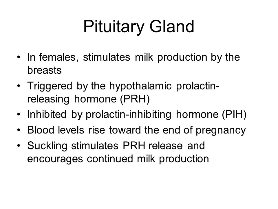 Pituitary Gland In females, stimulates milk production by the breasts Triggered by the hypothalamic prolactin- releasing hormone (PRH) Inhibited by pr