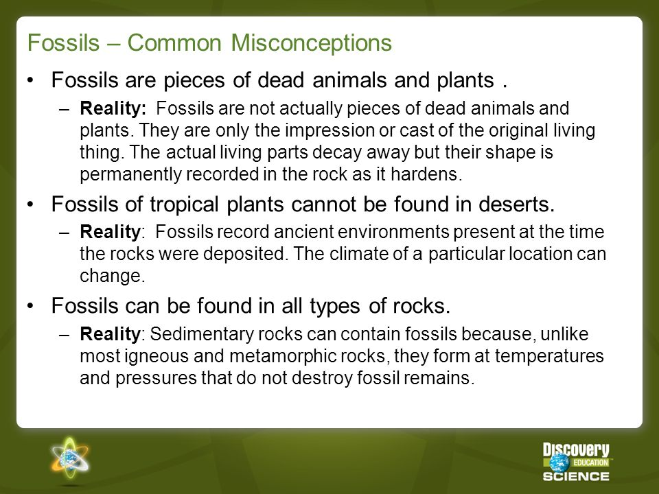 Fossils – Common Misconceptions Fossils are pieces of dead animals and plants. –Reality: Fossils are not actually pieces of dead animals and plants. T