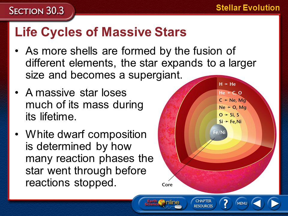 A massive star undergoes many reaction phases and produces many elements in its interior. Life Cycles of Massive Stars A massive star begins its life