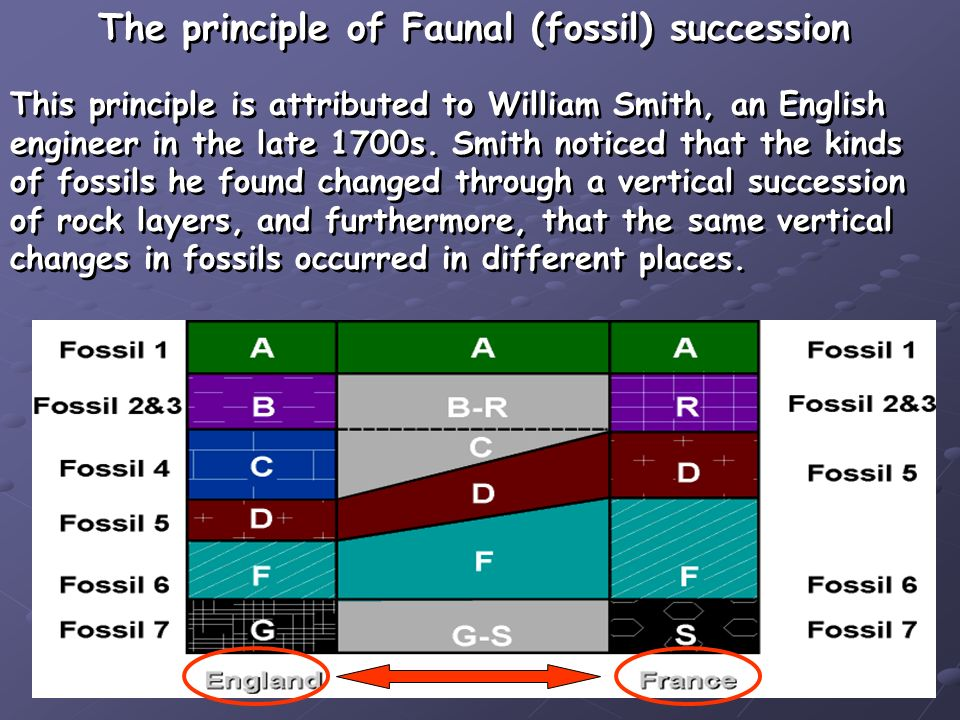 The principle of Faunal (fossil) succession This principle is attributed to William Smith, an English engineer in the late 1700s. Smith noticed that t