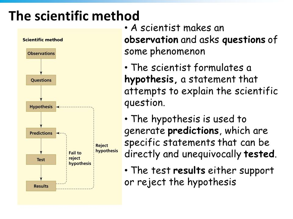 The scientific method A scientist makes an observation and asks questions of some phenomenon The scientist formulates a hypothesis, a statement that a