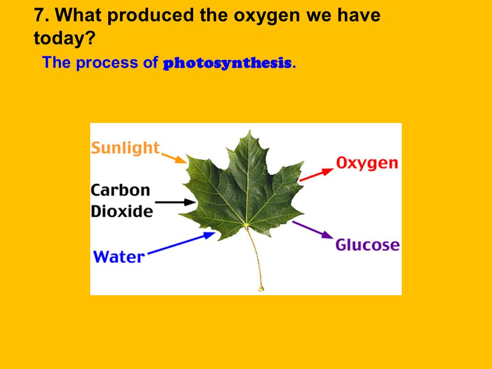 Cyanobacteria is a primitive plant responsible for photosynthesis during earths early atmosphere; producing oxygen.