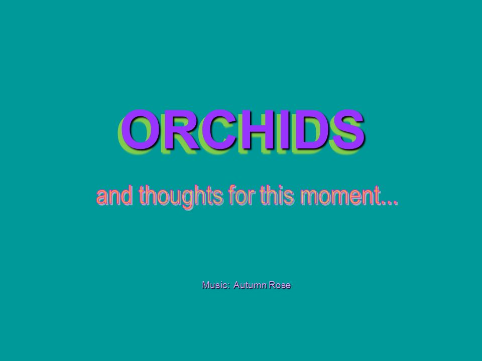 ORCHIDS ORCHIDS Music: Autumn Rose