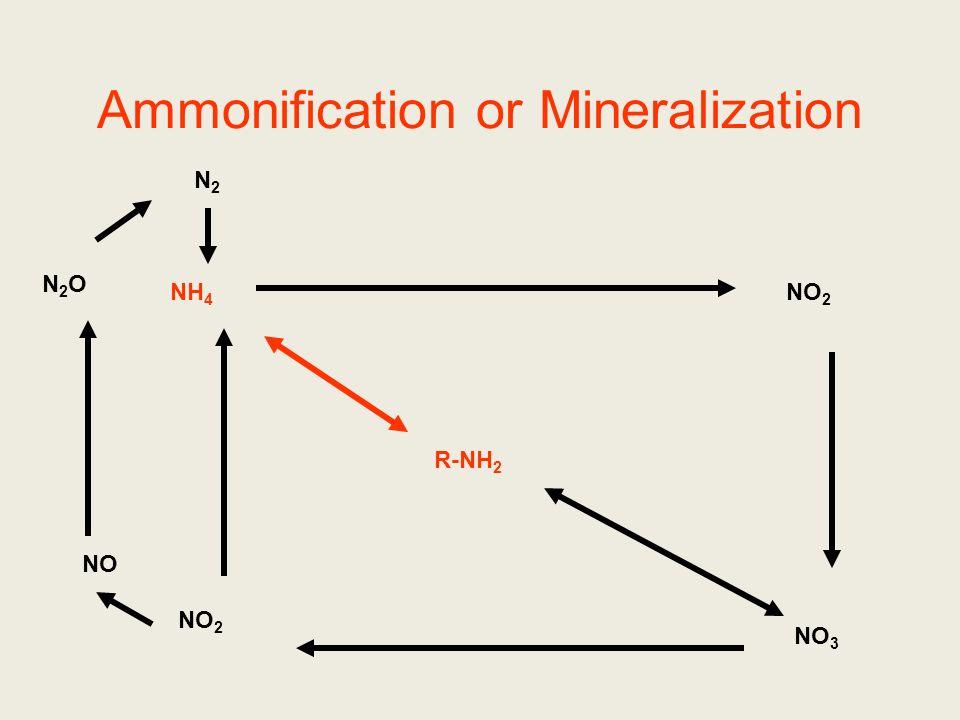 Nitrogen Cycle Ammonification/mineralization Immobilization Nitrogen Fixation Nitrification Denitrification