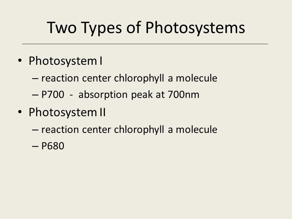Reaction Center Closeup Copyright © 2005 Pearson Education, Inc., publishing as Benjamin Cummings Chlorophyll a molecules Primary electron acceptor Ab