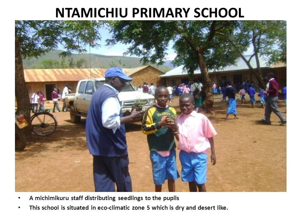 NTAMICHIU PRIMARY SCHOOL A michimikuru staff distributing seedlings to the pupils This school is situated in eco-climatic zone 5 which is dry and dese
