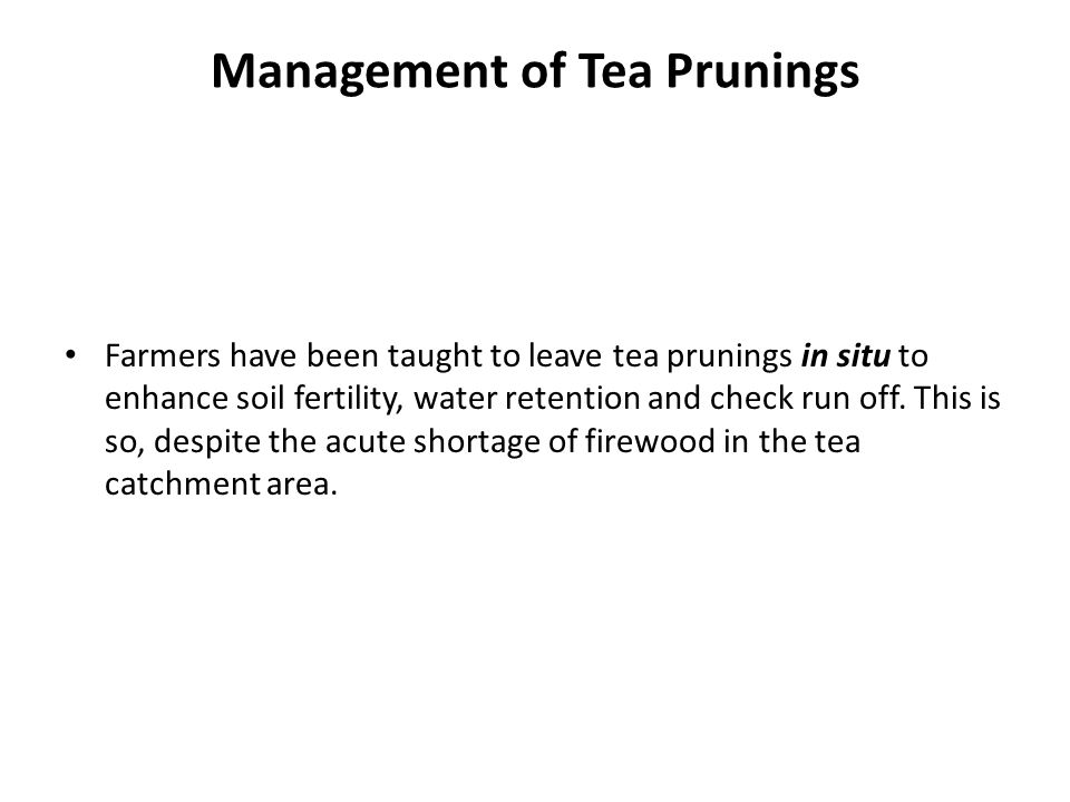 Management of Tea Prunings Farmers have been taught to leave tea prunings in situ to enhance soil fertility, water retention and check run off. This i